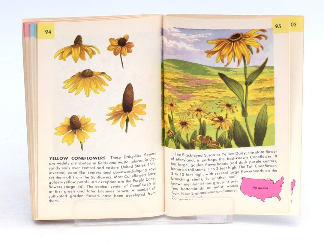Flowers A guide to familiar wildflowers