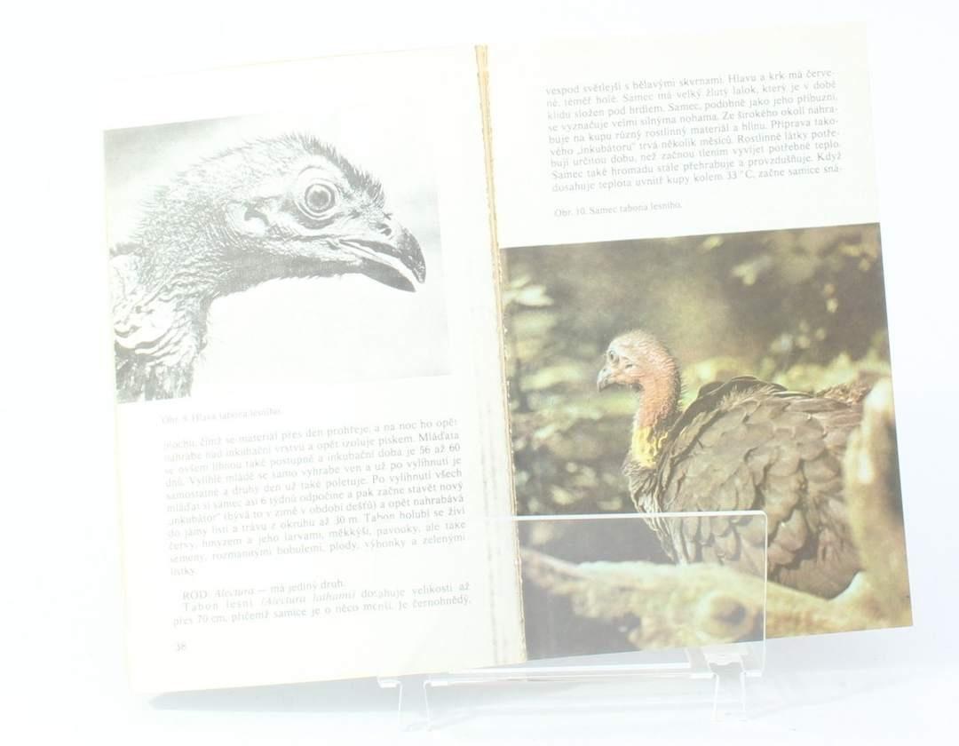 Zvířata celého světa 8: Bažanti a ostatní hrabaví