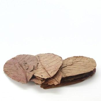 Listy mandlovníku JBL 2519800